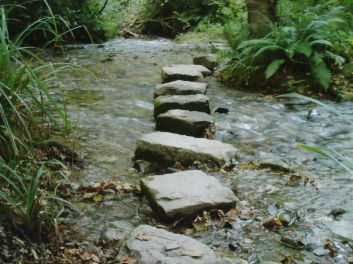 stepping stones, getting healthy, weight loss challenge