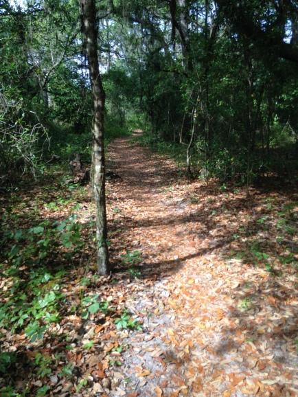 hiking, healthy habits, getting healthy, hiking trails