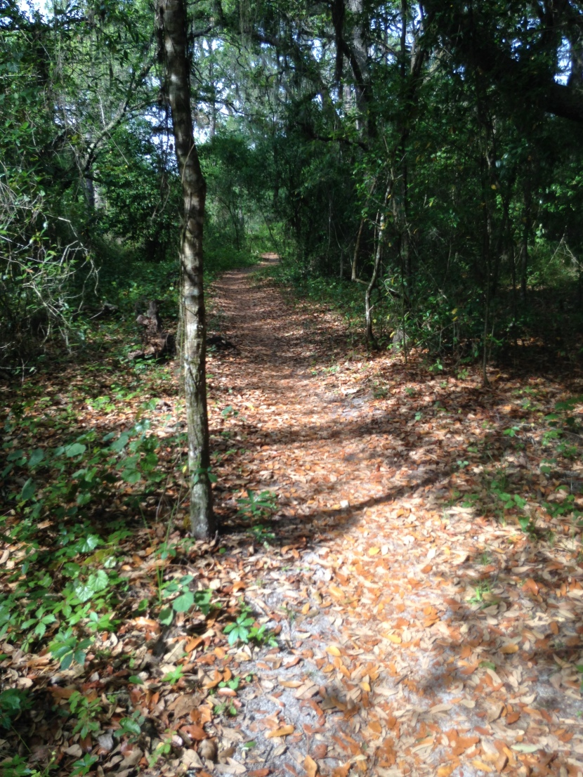 Finding New Trails