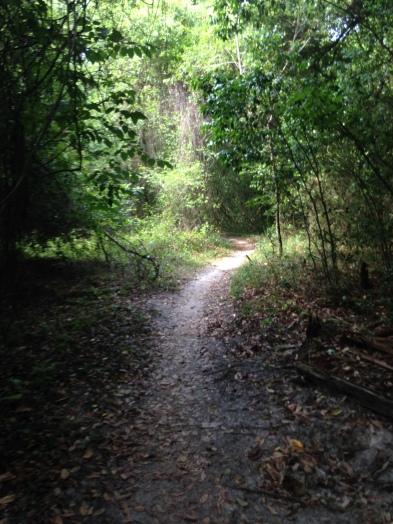 hiking trail, getting healthy, healthy habits